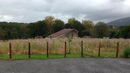 Création d'un jardin d'ombre et d'un verger au Pays Basque