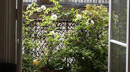 Un balcon sauvage en plein Paris